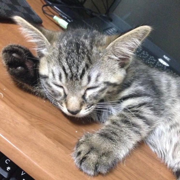 僕の新しい家族(猫)ティガさんが我が家にやって来た♪Part.2