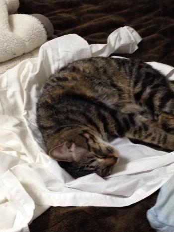 猫の夜鳴きと粗相が酷いので…来週、去勢手術に小牧の病院に行ってきます♪
