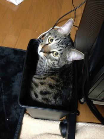 猫のご飯は1日何回あげるのが適切なのか?