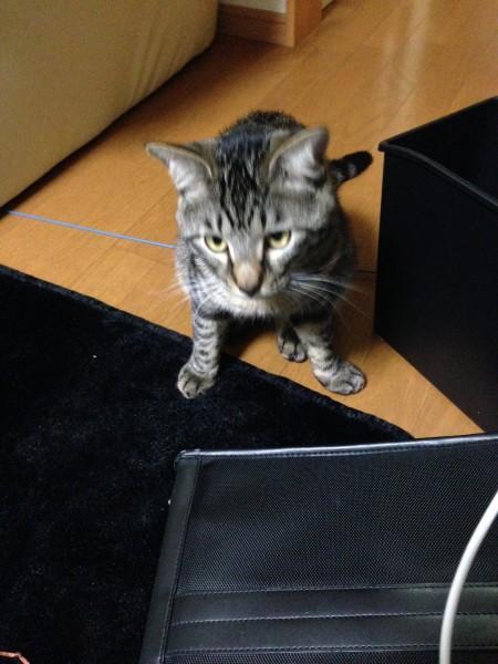 猫転送装置をやってみた!ティガさん最強です…結界を破る!