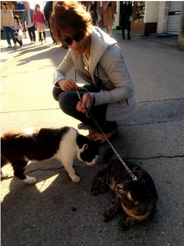 ティガさん野良猫と戯れる!?ことは出来なかった(・。・;