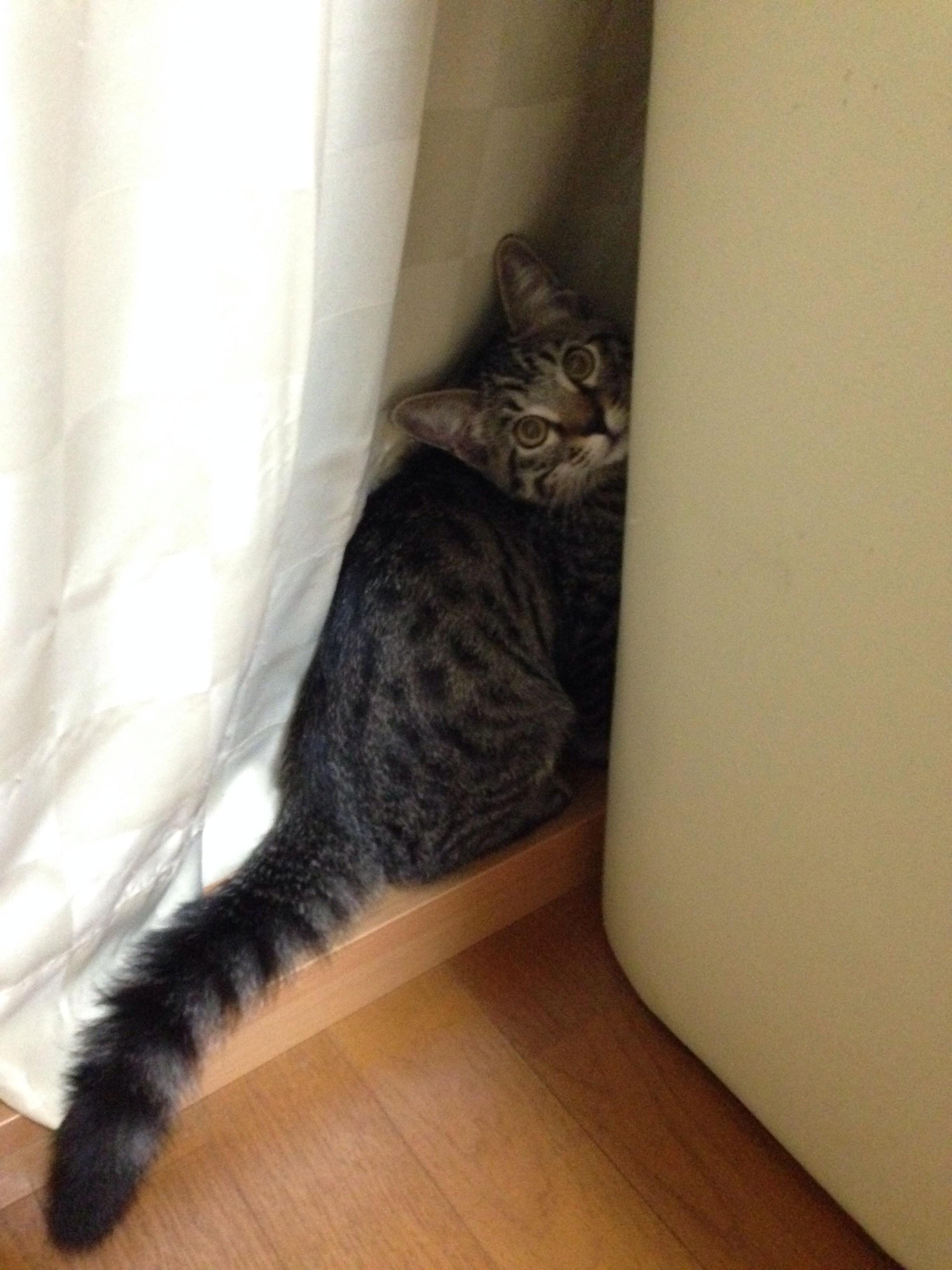 猫の粗相の治し方と対策の方法