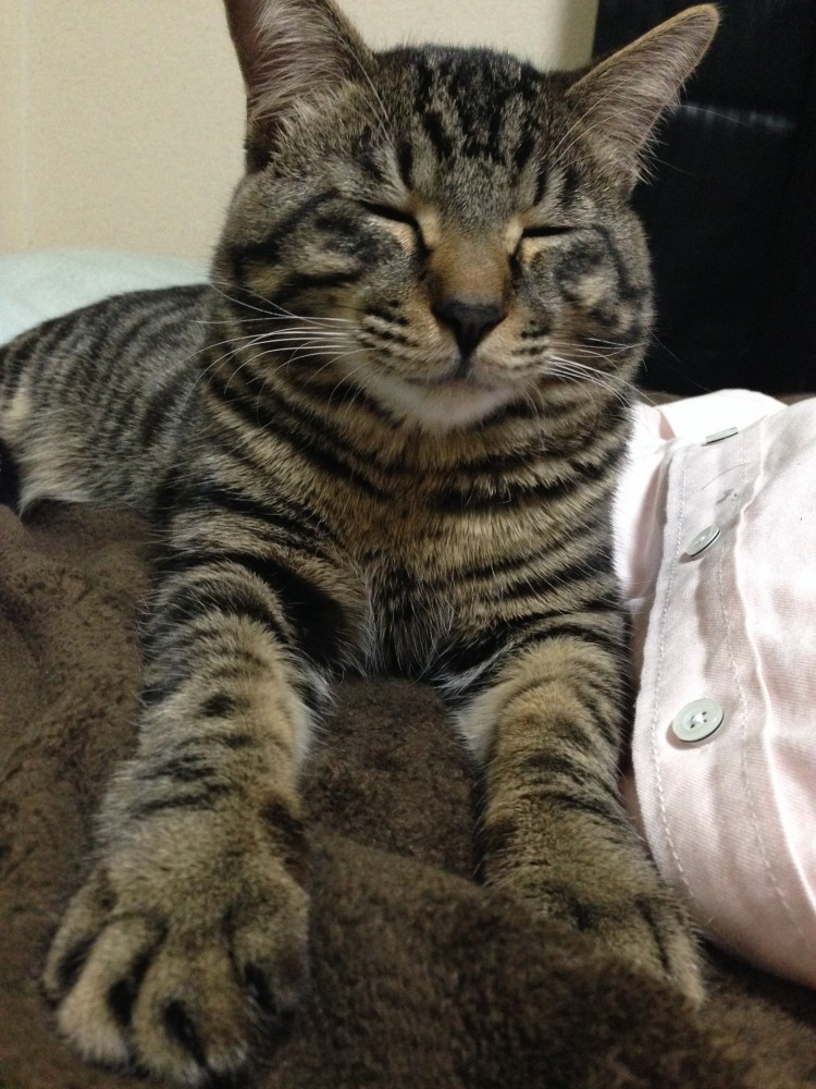 猫の鳴き声かわいいでしょ♪ティガさん動画を久しぶりにアップ