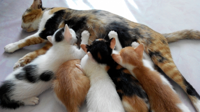 猫の種類別人気ランキング!性格も違いが解る♪