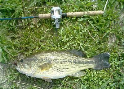 琵琶湖東の2016年の釣果は?【5月、6月】爆釣ポイント